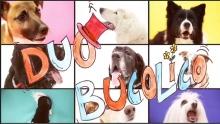 Anno: 2014  <br />   Il simpatico Duo Bucolico presenta il nuovo singolo La Bega Dei Cani. Il video &egrave; realizzato in sala di posa con i musicisti, tanti cani, e le illustrazioni di Giulia Gioacchini.&nbsp;   <br />   Il brano &egrave; contenuto nel disco Furia Ludica, pubblicato da Cinedelic Records.&nbsp;